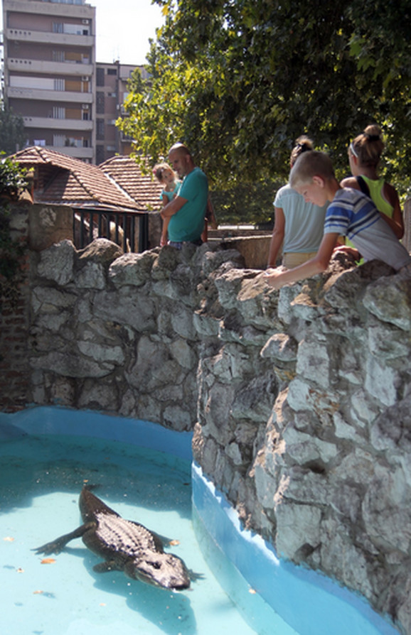 Omiljen među posetiocima Zoo vrta