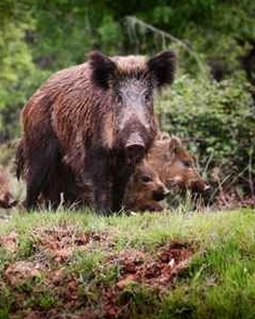 Niebezpieczne zwierzęta w Polsce