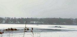 Dramat na jeziorze Ińsko. Chmara jeleni wpadła pod lód