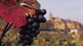 Festiwale Wina na Węgrzech 2014 - degustacje, zwiedzanie winnic, sztuka ludowa i imprezy kulturalne