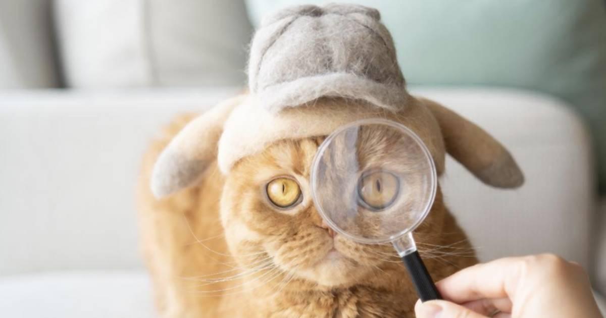 Dieser Japaner filzt Katzenhüte – aus dem Fell seiner Katzen