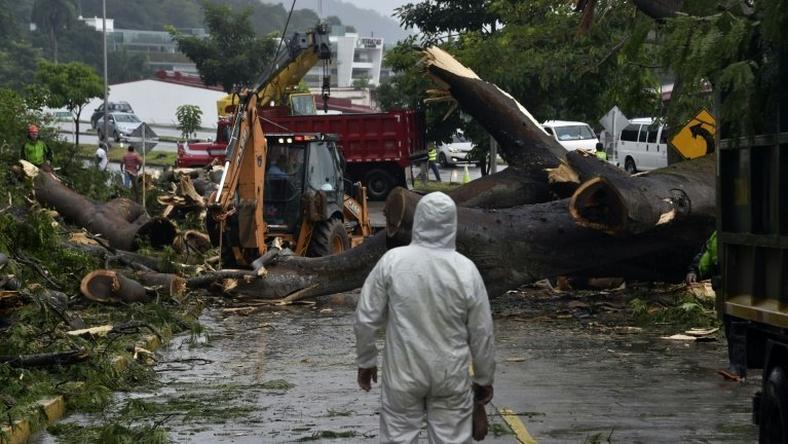 Workers cut a tree that killed a boy when it fell during heavy weather caused by Hurricane Otto in Panama City on November 22, 2016