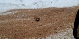 Makabra! Drogowcy posypali oblodzoną drogę piaskiem z ludzkimi szczątkami
