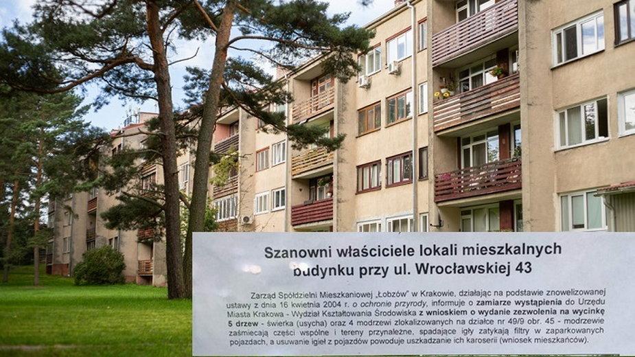 """Kraków Chcą wyciąć drzewa, bo te """"zaśmiecają"""""""