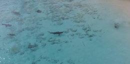 Chłopca bawiącego się w wodzie otoczyły krwiożercze rekiny. Co się stało? FILM
