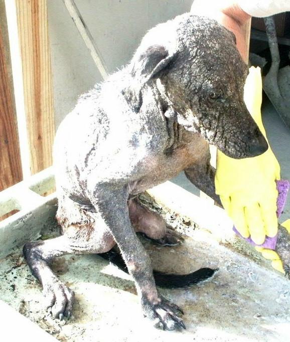 Većina napuštenih pasa boluje od nekoliko bolesti