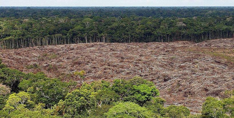 Jak zjadanie zwierząt zabija naszą planetę?