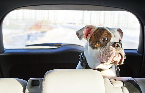 Dotychczas za wydanie paszportu dla zwierzaka wymagana była opłata w wysokości 51 zł
