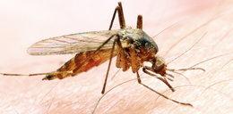 Komary będą kąsać aż do zimy!