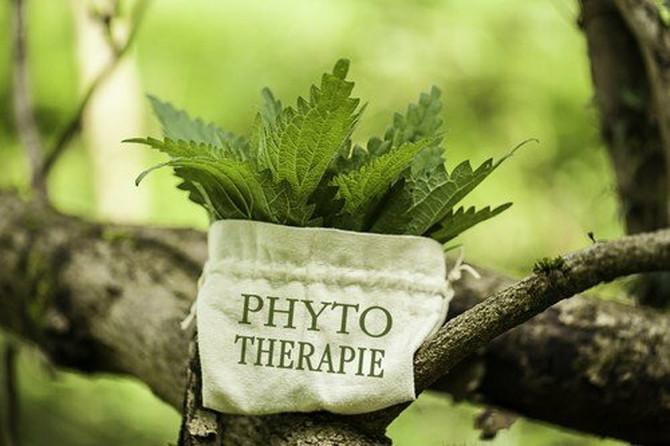 fitoterapija