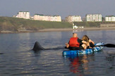 Morski pas, Golema psina