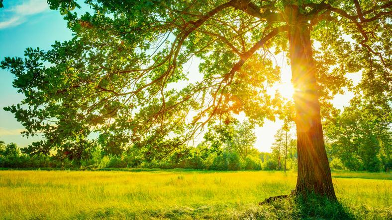 KOD zachęca, by w pierwszy dzień wiosny posadzić drzewo