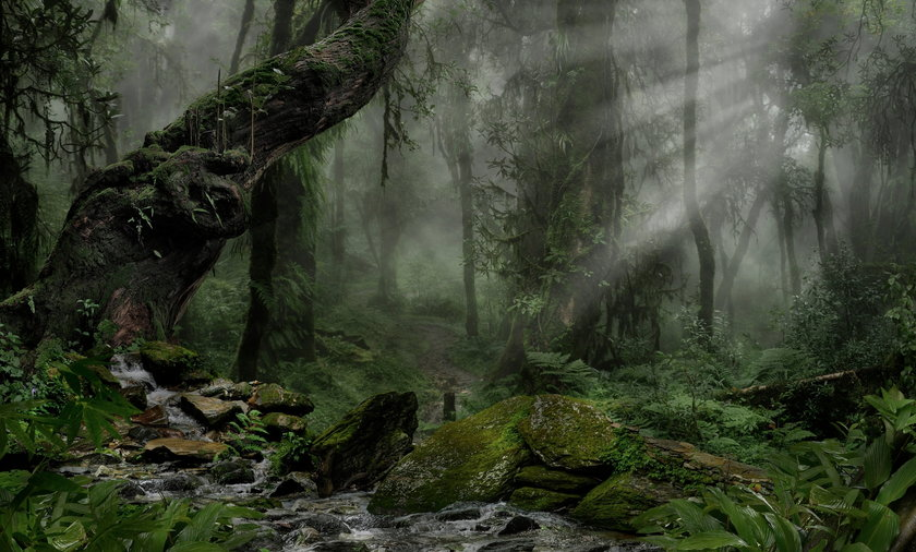 Grzybiarze znaleźli w lesie zwłoki.