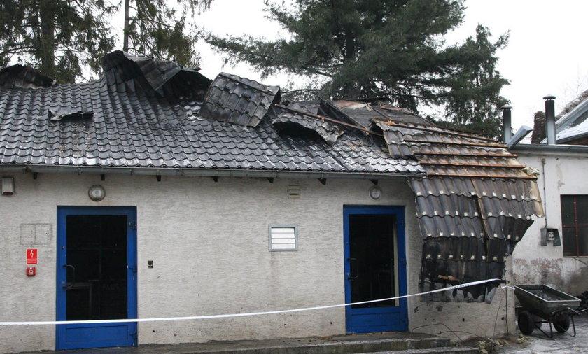 Tragedia w opolskim zoo. Spłonęło 400 zwierząt!