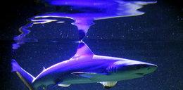 Rekiny w Małopolsce! Krążą po...