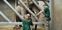Słonie trenują w zoo
