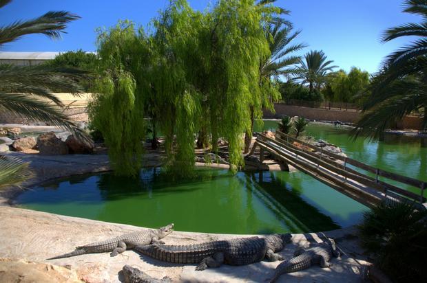 Farma krokodyli