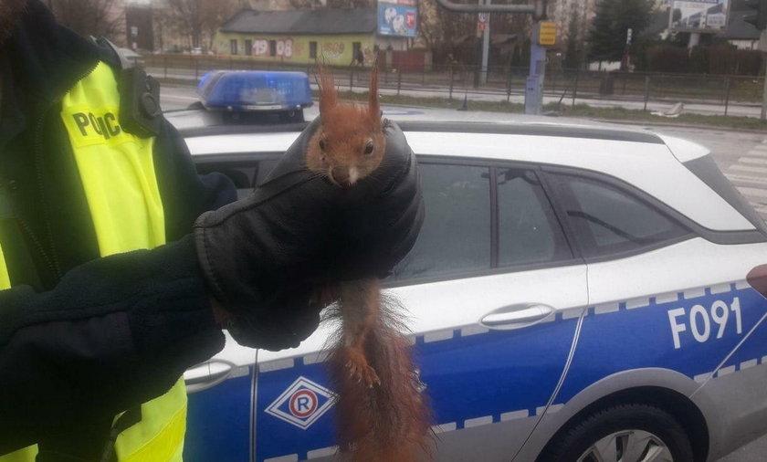 Ta wiewiórka miała prawdziwe szczęście! Policjanci uratowali jej życie