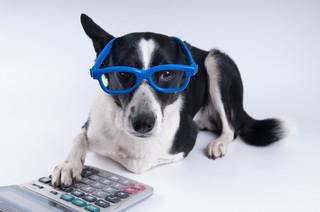 Psy pracujące dla fiskusa dostaną więcej czasu na szkolenie