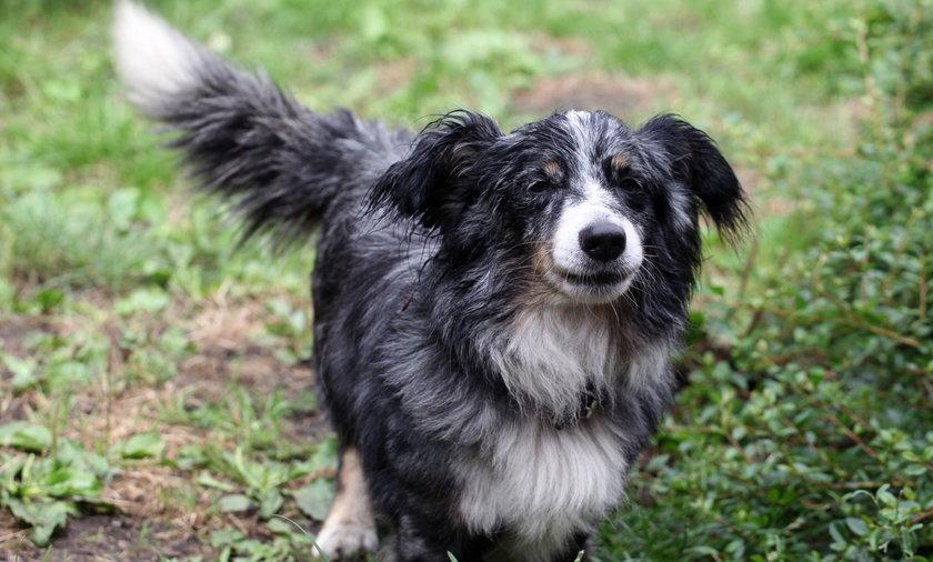 Pies Asik zamieszkał na grobie swojego pana