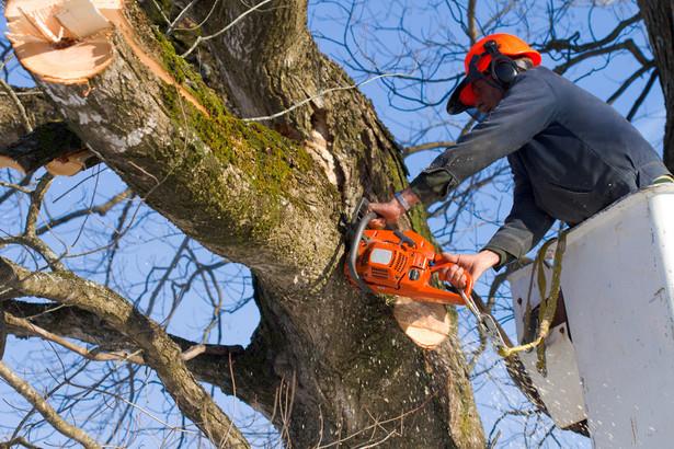 Wycinanie drzewa