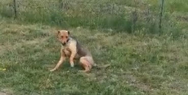 NIŠ psu slomili nogu