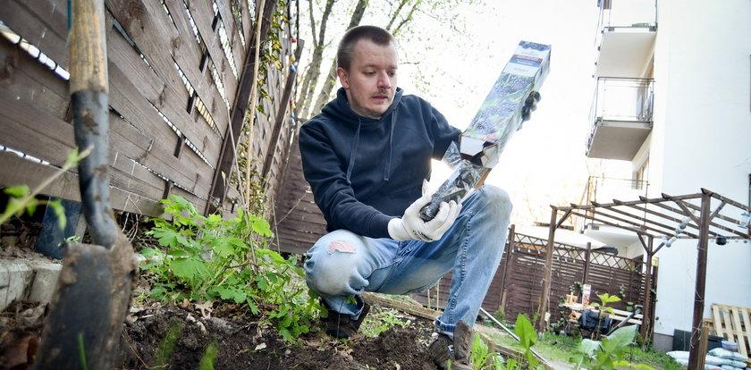 Jak sadzić sadzonki?