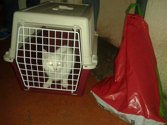 Mačke moraju biti u transporteru