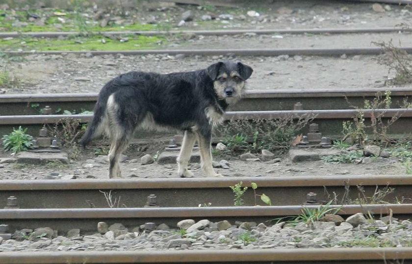 Pies na dworcu czeka na pana
