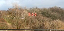 W zoo w Płocku urodziło się jedno z najrzadszych zwierząt na Ziemi. Jest ich na wolności tylko 50