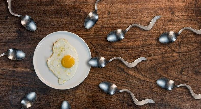 5 food that boosts your sperm count and semen volume