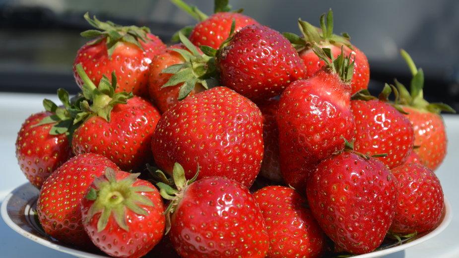 Uprawa truskawek nie jest wymagająca - Szymon/stock.adobe.com