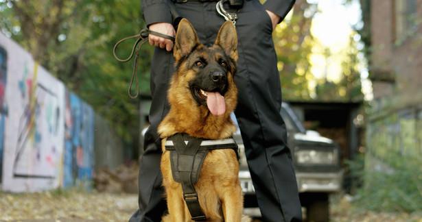 Do tej pory psy, którymi nie miał się kto zająć, trafiały zwykle do schronisk, a tylko nieliczne do specjalnych ośrodków