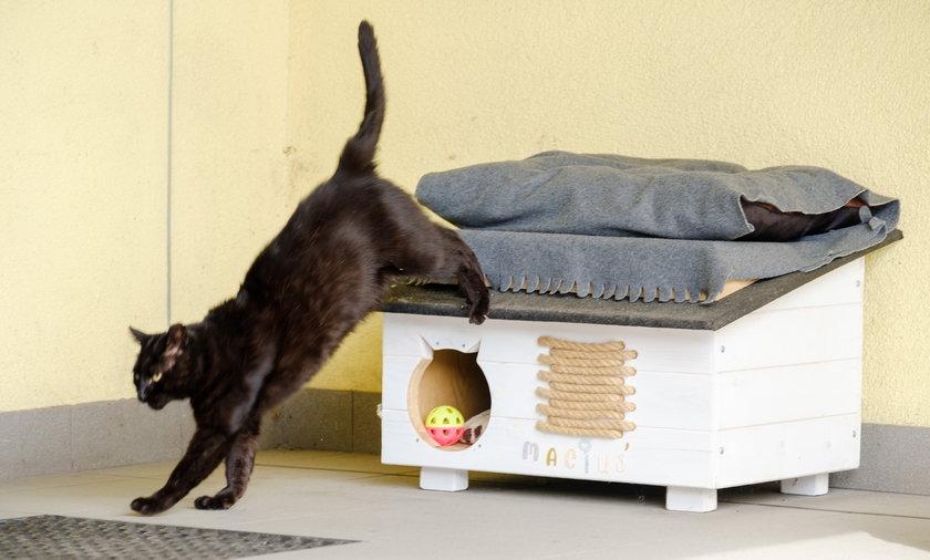 Kot Maciek, który zadomowił się w sosnowieckich wodociągach.