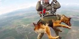 Niemożliwe! Pies skoczył ze spadochronem