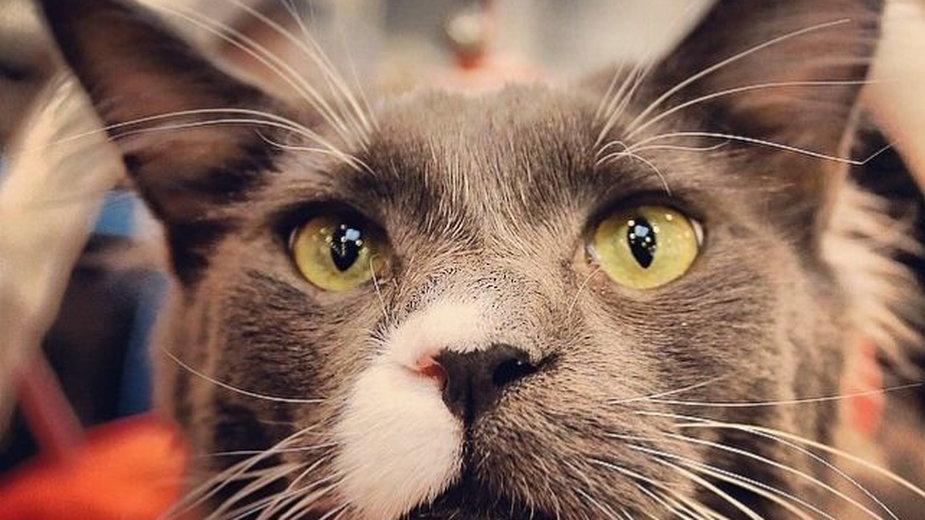 Kastracja jest wskazana dla wszystkich kotów niehodowlanych