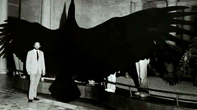 Argentavis magnificens egy korai modellen.