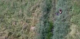 Dramatyczne chwile na bagnach. Operator drona nagle coś dostrzegł. Nagranie wywołuje ciarki na plecach