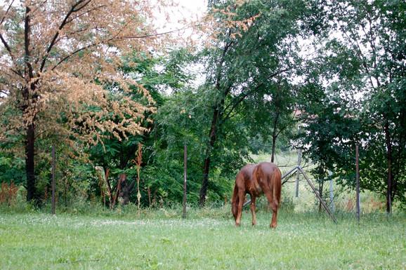 Konj koji je svojevremeno izazvao nesreĆu na Konjarniku