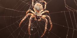 Boisz się myszy i pająków? Weź pigułkę