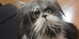 Czy to pies czy kot? Zdjęcie tego zwierzaka podbija Internet