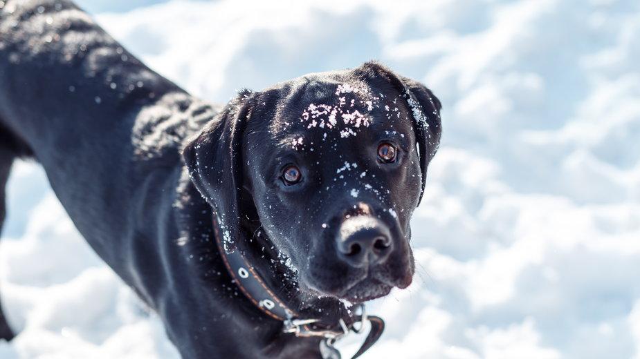 Dzięki psu 65-latek został reanimowany i przeżył. Zdjęcie ilustracyjne