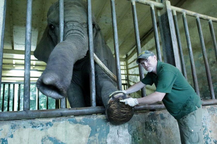 Tak dba się o słonie w zoo