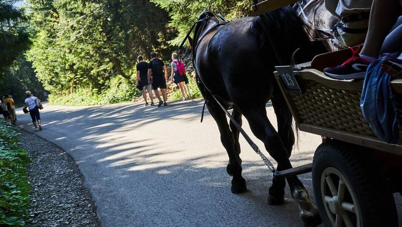 Koń, turyści i droga do Morskiego Oka