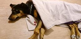 """Wyrzucił psa przez okno? """"Miał połamane łapy i wył z bólu"""""""