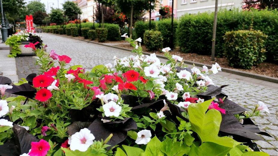 Kwiatowe kompozycje na ulicach Nowej Soli