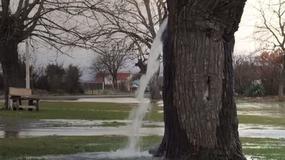 Z tego drzewa tryska woda! Jak to możliwe?