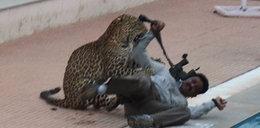 Lampart zaatakował obrońcę dzikich zwierząt