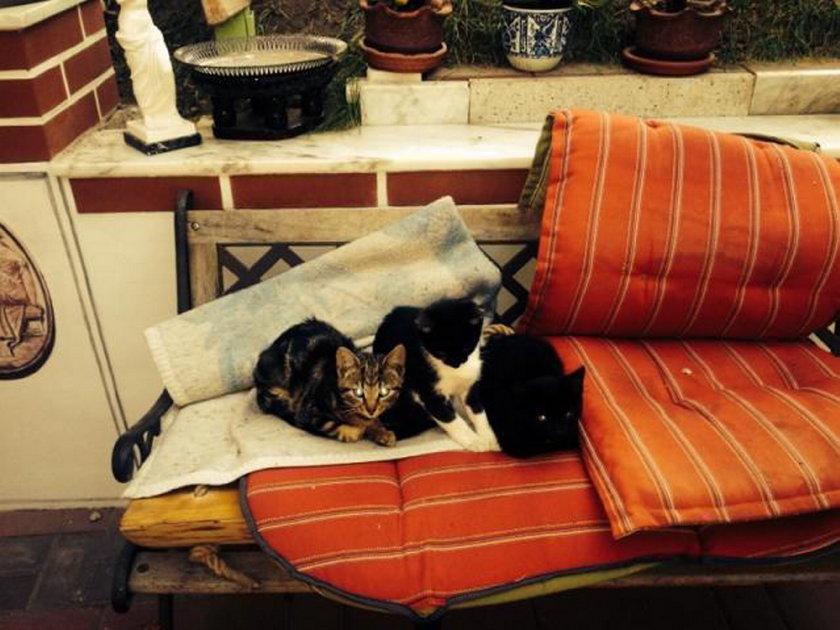 Marek Suski i jego koty