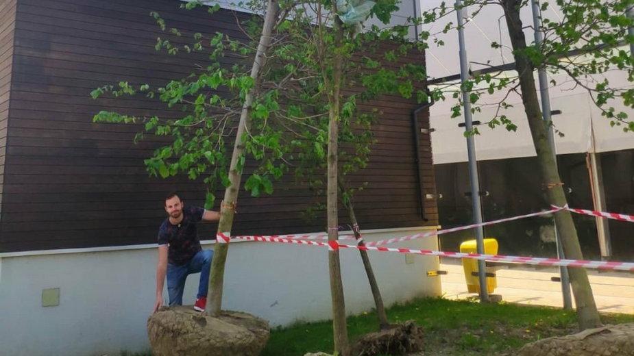Bielsko-Biała: posadzono duże drzewa w parku Słowackiego